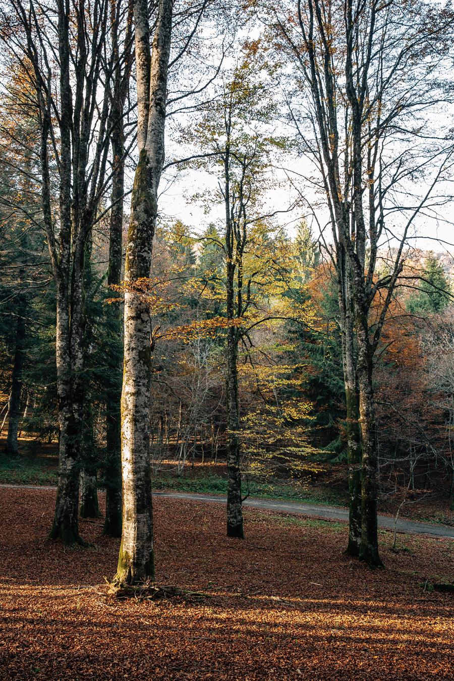 Renato Zanette fotografo storytelling e still life Osteria da Franco foresta del Cansiglio