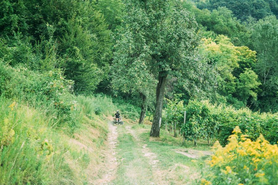 Renato_Zanette_Fotografo_Vittorio_Veneto_Azienda_Agricola_Biologica_Reghet_Ai_Piedi_Del_Cansiglio