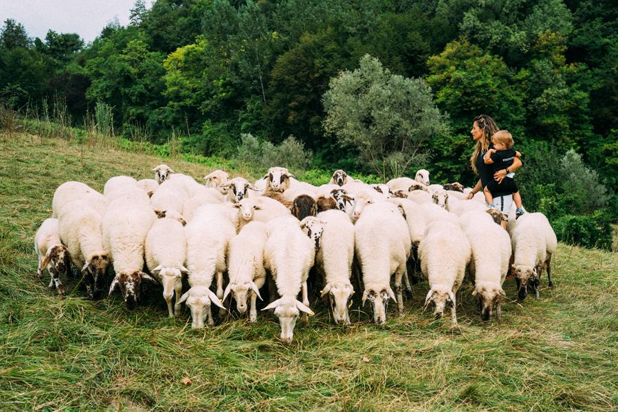 Renato_Zanette_Fotografo_Vittorio_Veneto_Azienda_Agricola_Biologica_Reghet_Ai_Piedi_Del_Cansiglio_Ovini